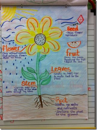 I think this is a great Ideas especially because we were just learning about plants and gardens in my practicum classroom!