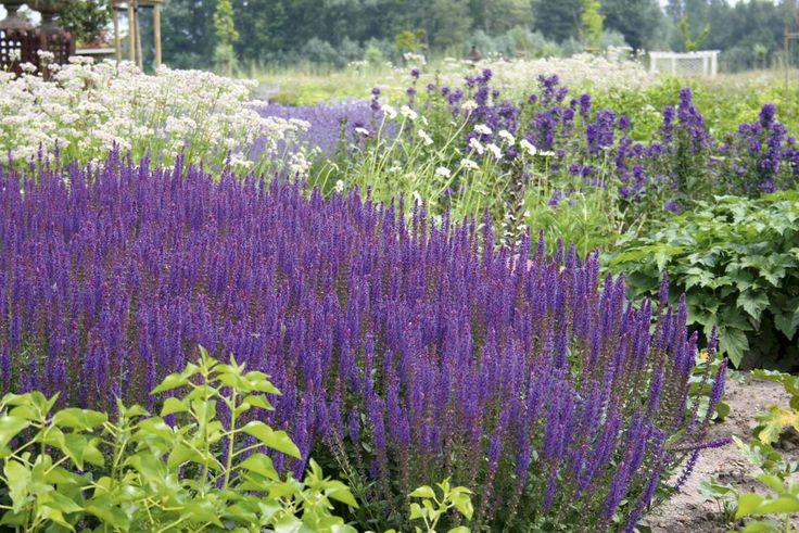Landschappelijke tuinen   Filip Van Damme