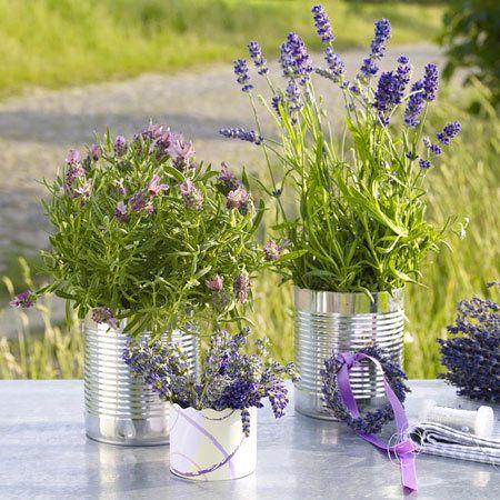 Lavendel-Deko - dufte Ideen für den Sommer - dosen-lavendel2 Rezept
