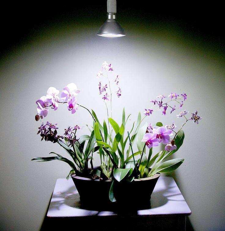 Belys din inomhusväxter med rätt lampor och gärna snygga om de ska passa in i utrymmet där dina växter behöver extra ljus.  Titta in vår webbshop där vi har belysning av högsta kvalitet för att dina växter ska trivas och må bra.  #växtbelysning #lampor #lampa #wexthuset #växtlampa #belysning #krukväxter #odlingstips #krukväxt #växter #inomhusodling #urbangardening #orkidéer
