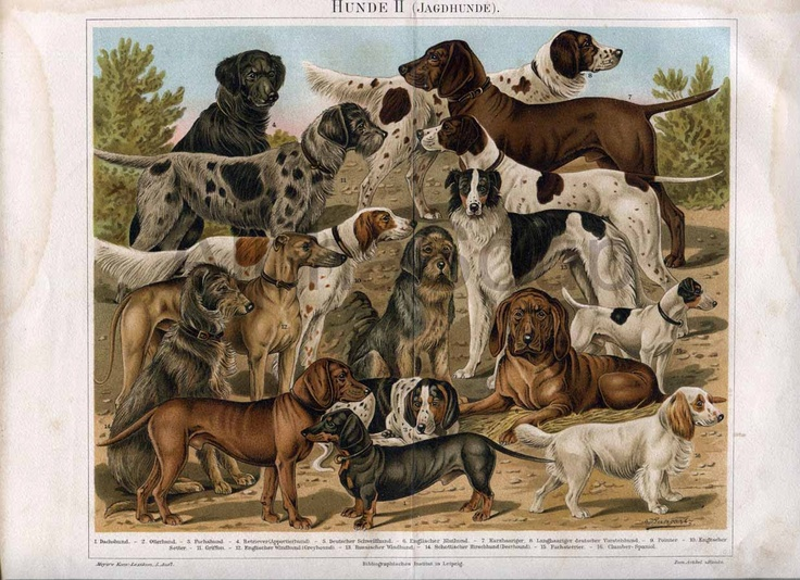 all kind of dogs: Hunting Dogs, Dogs Fine, Gorgeous Dogs, Antique Dogs, Dog Art, Dog Breeds, Antiques, Animal