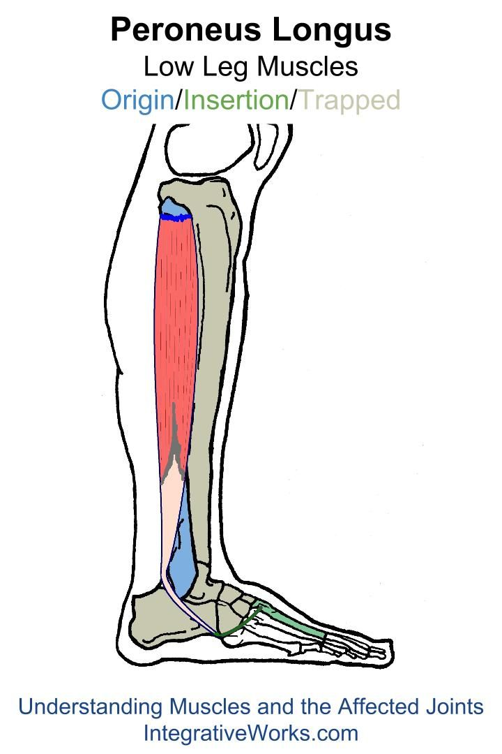 Understanding Trigger Points - Painful, Unstable Ankle