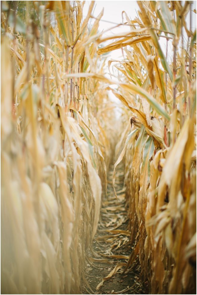 We can't help but love walking through a corn maze in the fall.