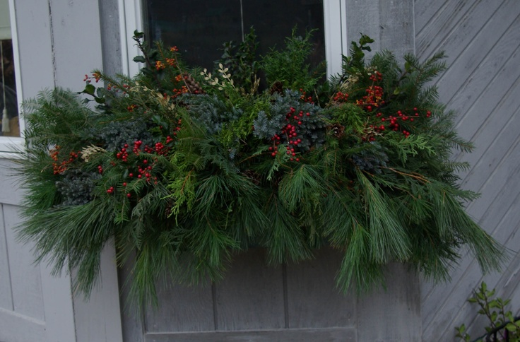 Winter window box using 98% greens from my yard (the little red berries and gold leaves are fake).