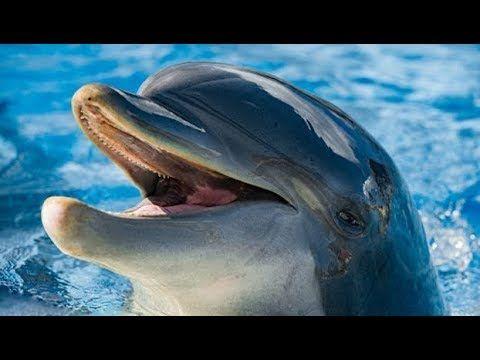 Супер Дельфины
