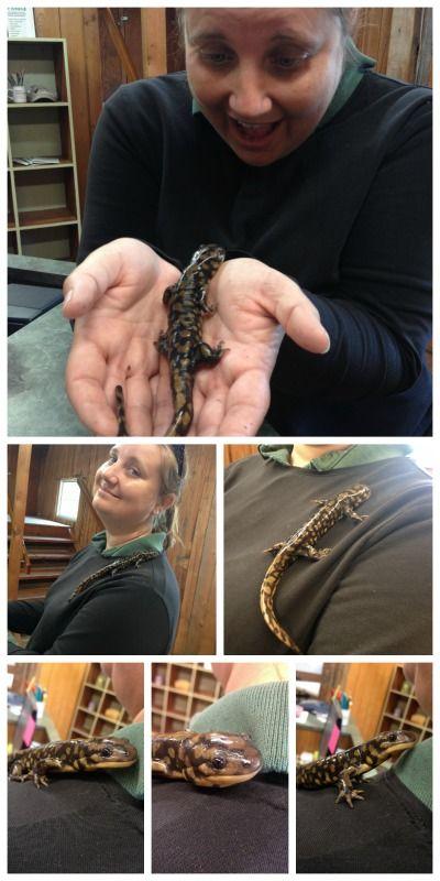 #salamander #hayesarboretum #wildlife