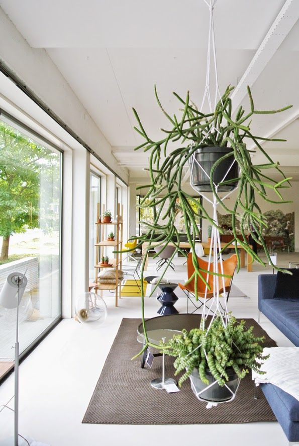 stunning house plants delivered. Hanging plants add style  174 best Houseplants and Gardening Indoors images on Pinterest