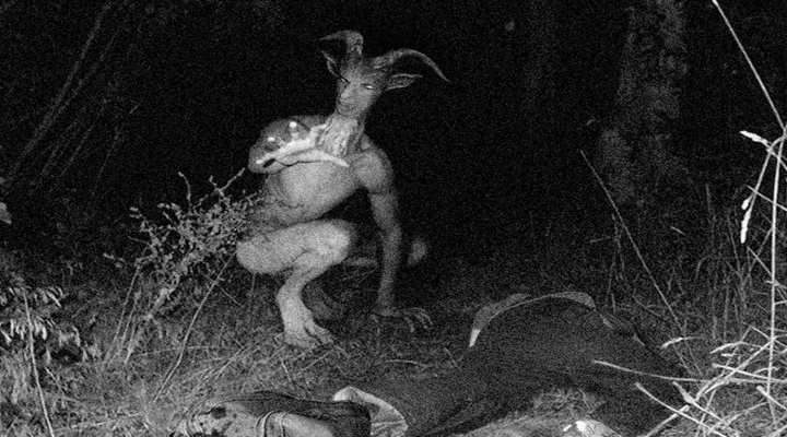 TOP 10 Scariest Unexplained Trail Cam Photos From mysterious glowing angels, to real zombies, here are 10, of the scariest photos, caught by trail ...