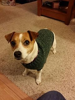 Knitting Pattern For Jack Russell Dog : 128 best images about Knitting on Pinterest Womens beanie, Free pattern and...
