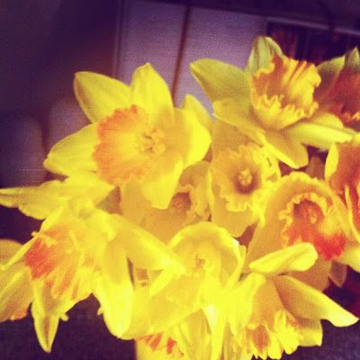 Love From Annie: Daffodil Day