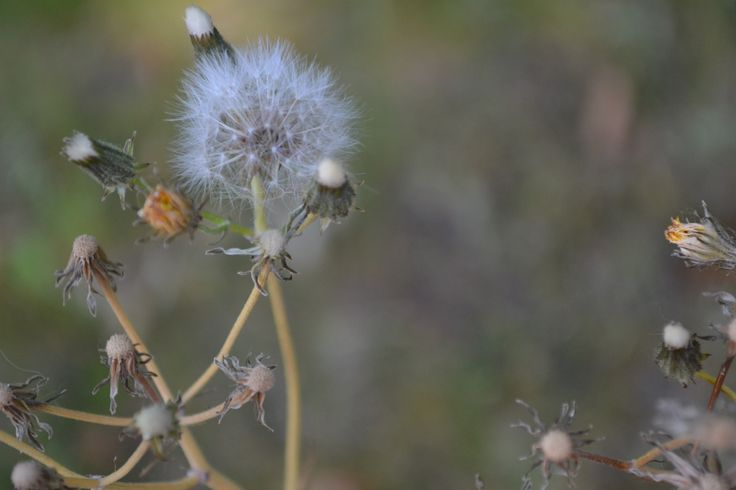 Depth of field of flower