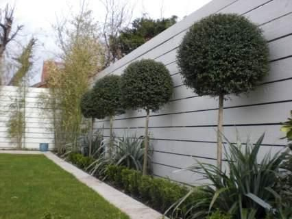 I like the colour of the wall and these trees. Might look daft in our place... but I do like.