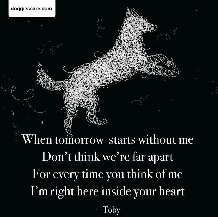 Sympathy Dog Quotes: Best 25+ Pet Sympathy Quotes Ideas On Pinterest