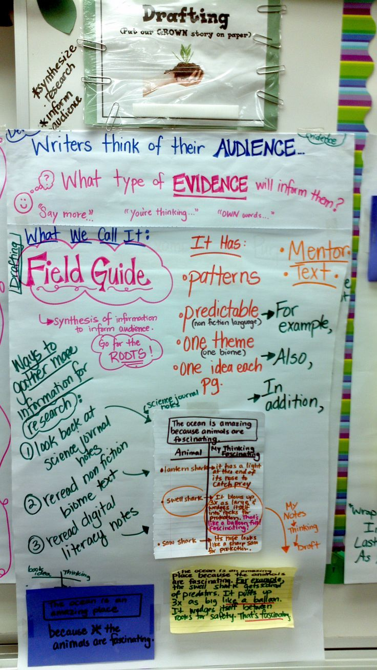 expository writing for 3rd grade