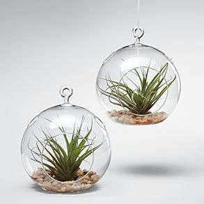 Nice!  Glass globe terrariums w/ air plants - I've love to have a couple of these.  I could hang them in my kitchen window.  :-)