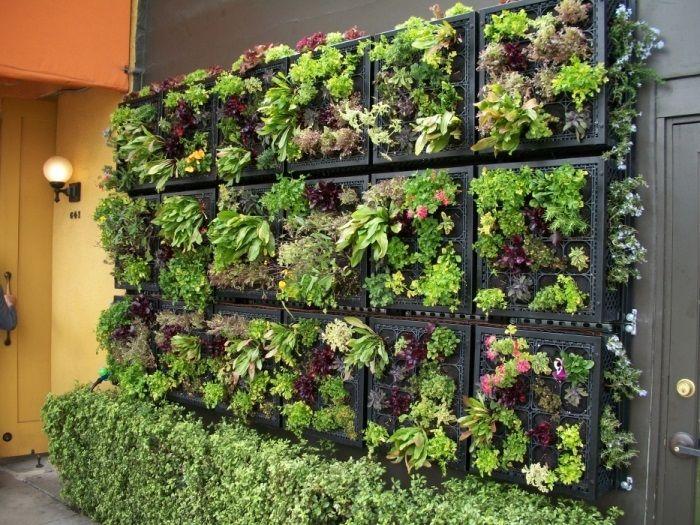 Обычные старые пластиковые ящики могут стать отличным основанием для небольшого вертикального сада.