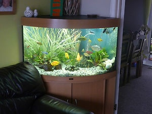 how to clear up murky fish tank water