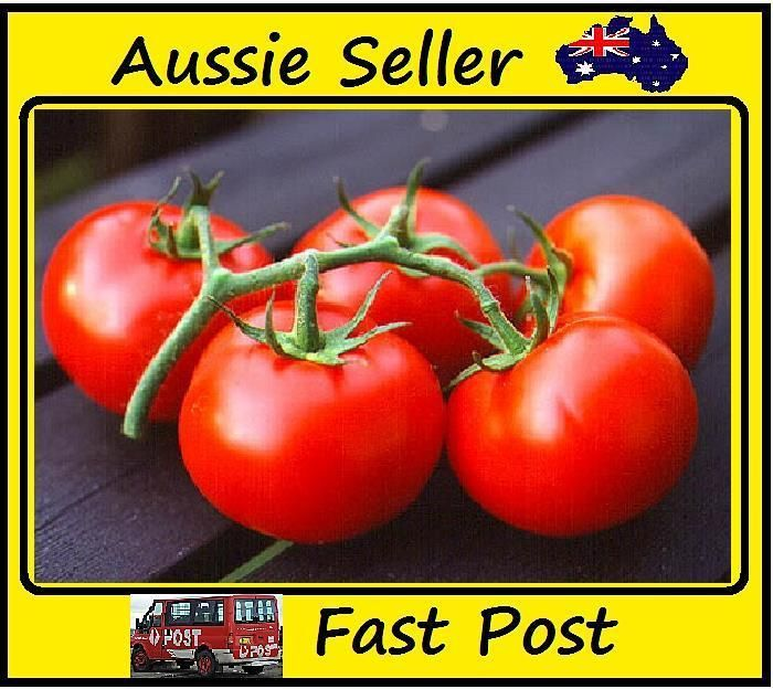 100 Pcs Juicy Red Tomato Seeds Easy Grow Home Garden Plant