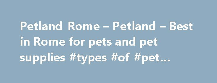 Petland Rome – Petland – Best in Rome for pets and pet supplies #types #of #pet #bottles http://pet.remmont.com/petland-rome-petland-best-in-rome-for-pets-and-pet-supplies-types-of-pet-bottles/  Petland of Rome, GA is the best source for healthy, happy puppies, kittens, birds, reptiles, fish, and small animals. We are locally owned and operated by pet lovers that specialize in matching you to your next pet. All our animals, including fish, reptiles, and birds come with our limited health…