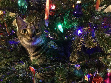 Kitty, Christmas Tree, Pet, Animal