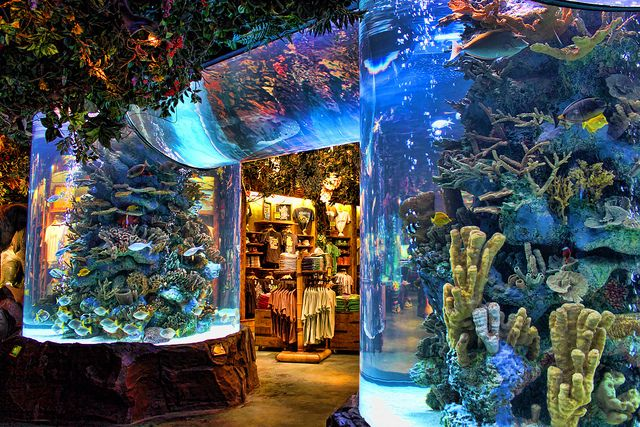 Rainforest Cafe.  I just can't wait! My new favorite place to eat!