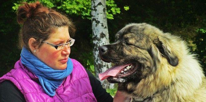Udělali jsme si výlet do Brna na Mezinárodní výstavu psů. Protože když chcete dům, sluší se, aby u něj byl pořádný pes. A kde jinde si ho vybrat, když ne na největší výstavě v Česku?