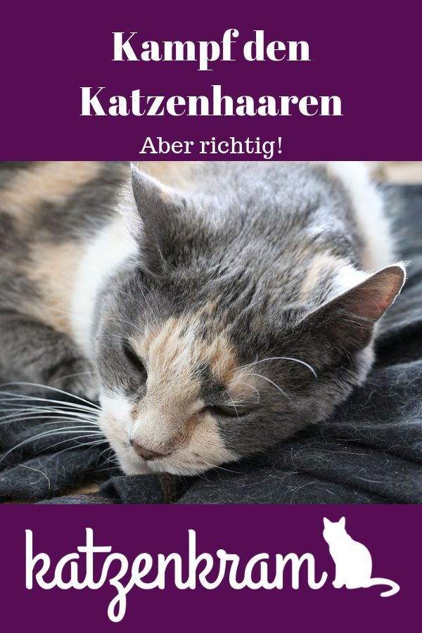 Cat hair everywhere! But how do you master them? And without much effort? T