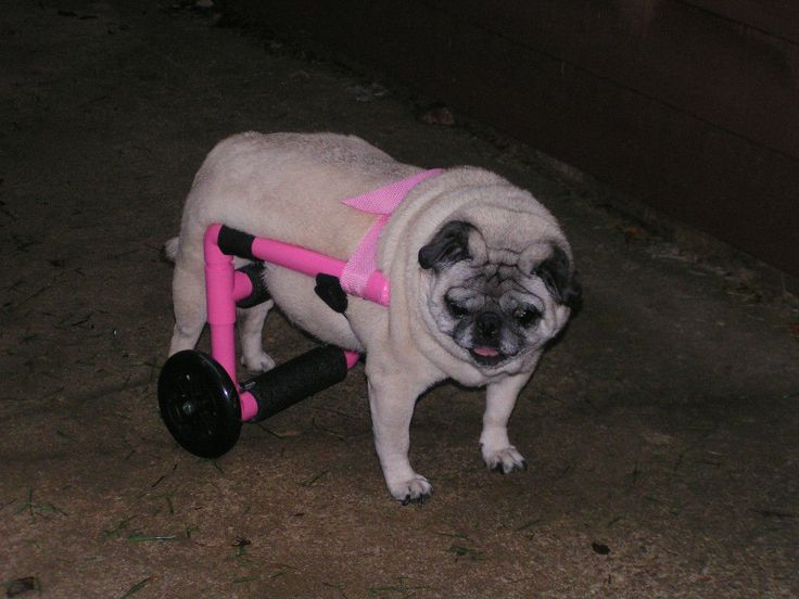 how to build a small dog wheelchair