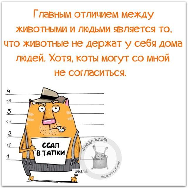 #правдажизни #юмор #позитив #кот