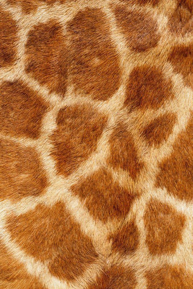 Dit is de huid van en giraf. Je ziet dat het allemaal korte haartjes zijn.