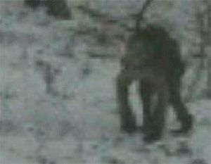 Top Ghost and Paranormal Pictures of 2013: Strange Troll Creature