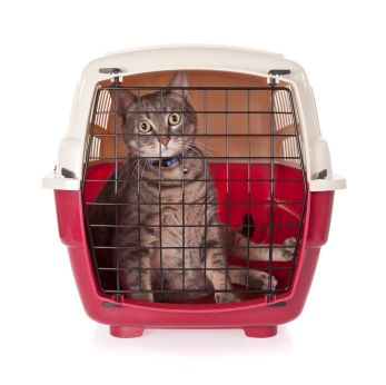 Top 7 Tips for Traveling with Your Cat in the Car- Spring Creek Feed cares about your animals. Visit us at http://www.springcreekfeed.net/ for a wide variety of dog/cat pet foods and supplies.