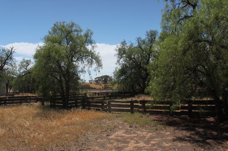 Sheep-yards on the railway line at Kinnabulla near Bob Crosbie's shed, built with railway iron and sleepers.