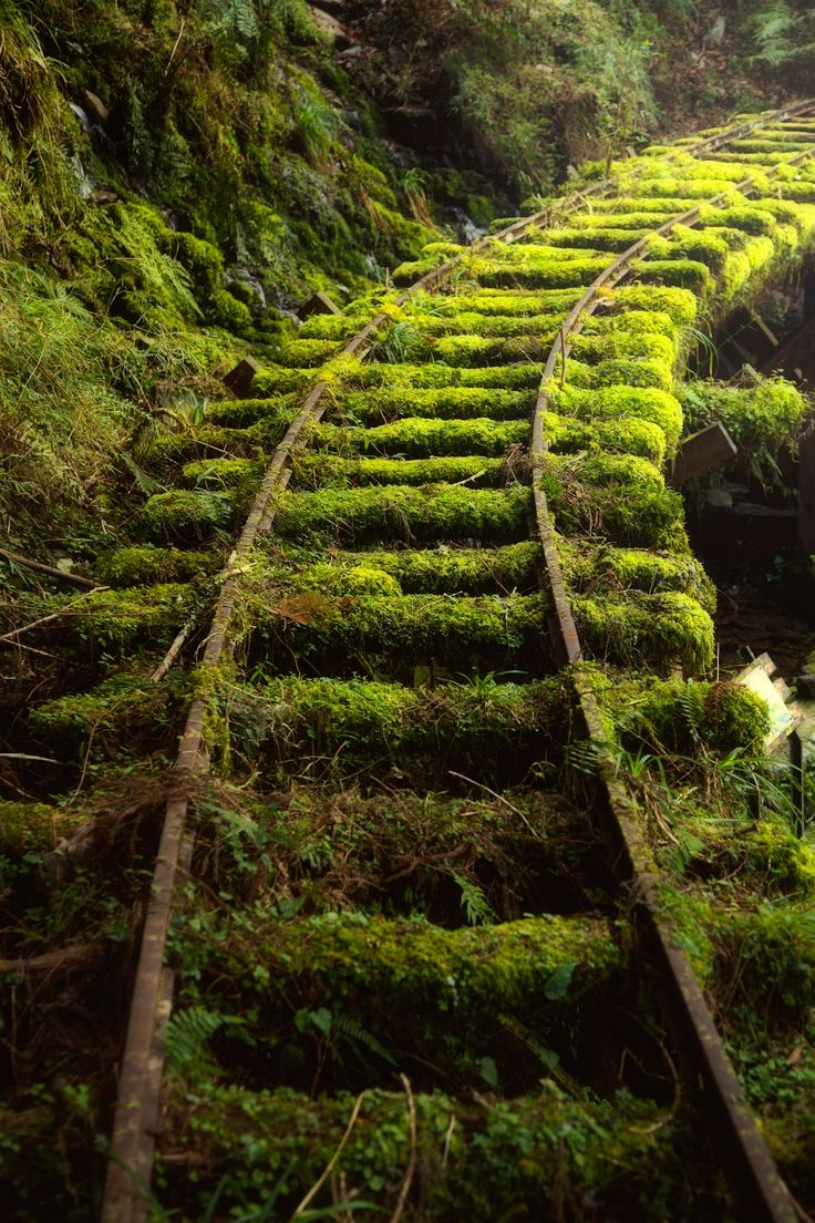 The mossy railway - null