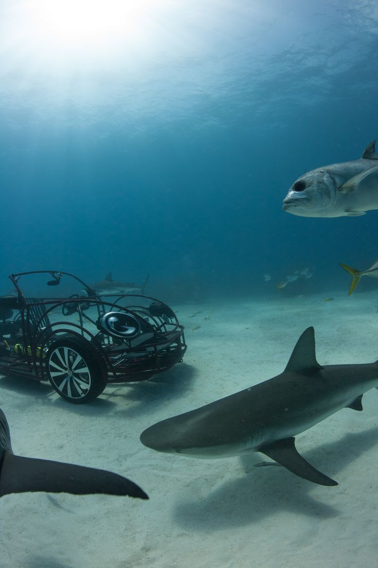 17 best images about shark discovery channel volkswagen continues relationship discovery channel bringing a new version of the vw beetle shark cage back