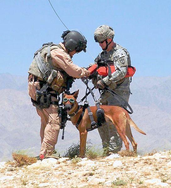 Datei: Militärische Hund in Afghanistan ist für einen Hubschrauber hoist.jpg vorbereitet