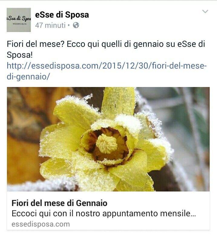 I fiori  di gennaio per le spose invernali su essedisposa.com  #essedisposa #wedding #day #weddingblog #Matrimonio #mart #martinasaliva #happy #time #sposi #amore #fiori