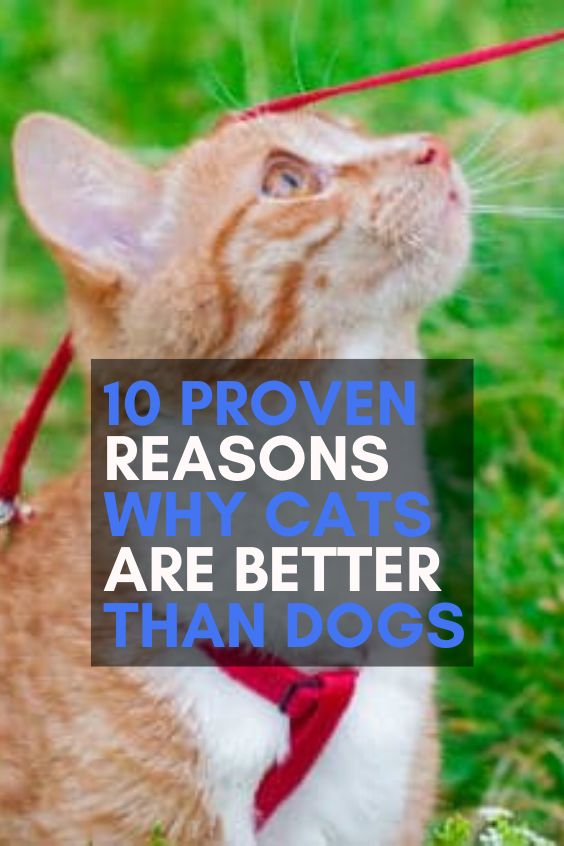 10 Proven Reasons Why Cats Are Better than Dogs. | Funny