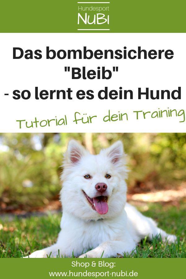 """Hund """"Bleib"""" beibringen? Wieso ein Auflösekommando besser ist"""