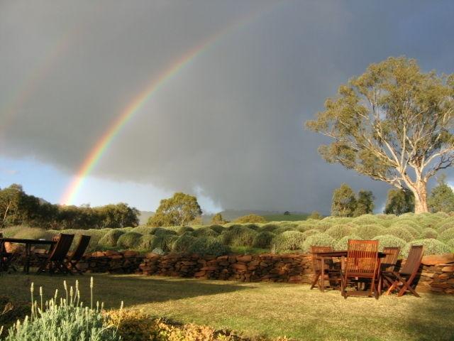 Lyndoch Lavender Farm, Barossa Valley