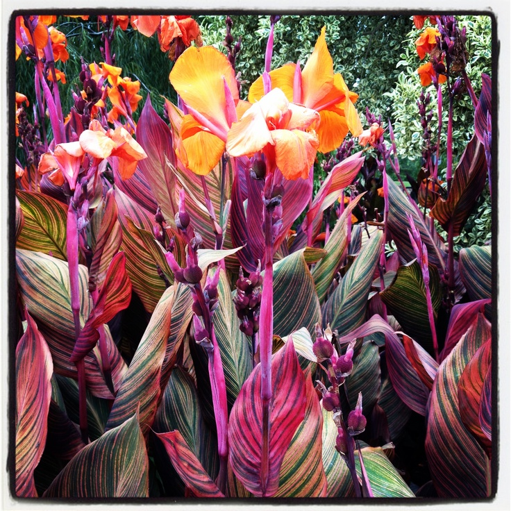 Gorgeous colour at the Hunter Valley Gardens