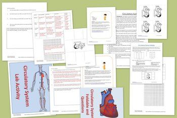 Circulatory System Lab and Notes Teaching pack. Includes lab and foldable notes for a lower price than separately $3