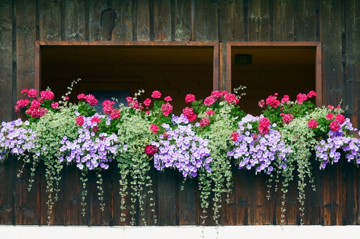 Example of a symmetric flower box with a repeating pattern of light purple, fuchsia and green flowers and plants. I love this repeating pattern effect.