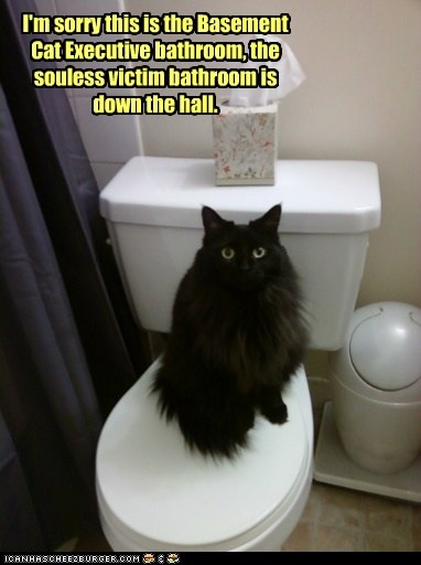 Ahhhhhhhhh, basement cat....my black cat does this exact same thing!!