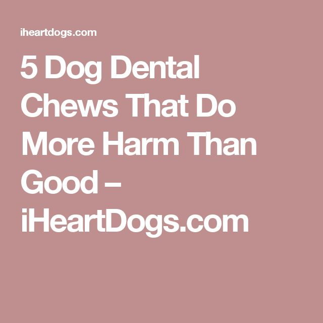 5 Dog Dental Chews That Do More Harm Than Good – iHeartDogs.com