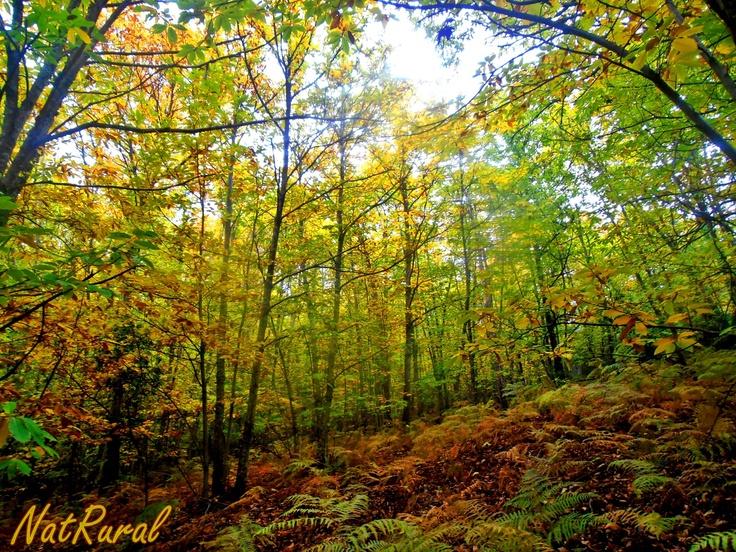 Geoparque Villuercas. Espectacular otoño.