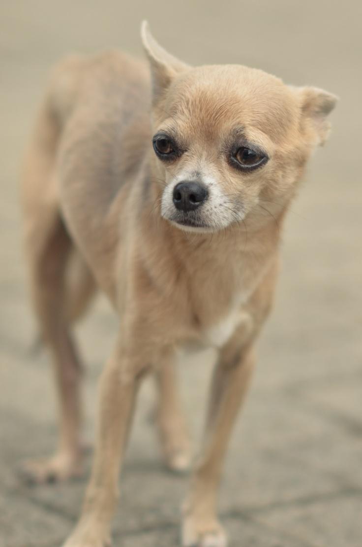 17 Terbaik Ide Tentang Anjing Lucu Di Pinterest Gambar Anjing Lucu
