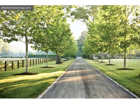 Dream Driveway leading up to my home ;) (LOVE driving up with trees on both sides!)
