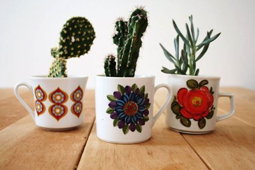 mugs and succulents