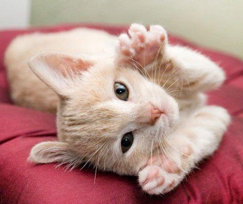Все видели как кошки топчут вас лапками?А почему же она так желает?